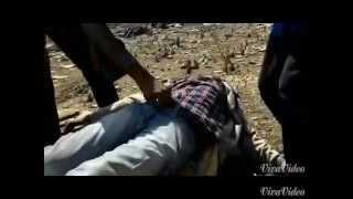 money tree short film in brahmamgari mattam