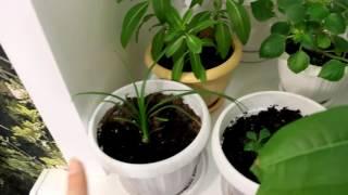 видео Где купить растения