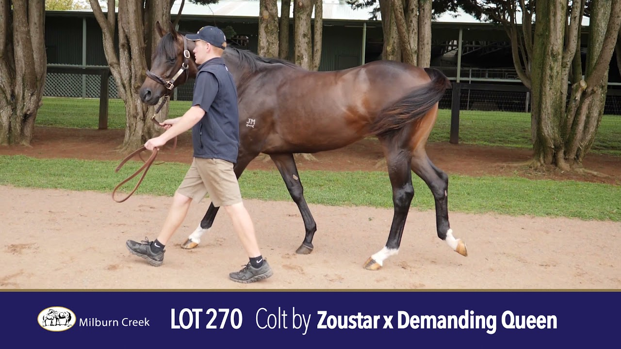 Lot 270 Easter Yearling Sale