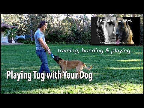 The Power of Playing Tug with your Dog  Robert Cabral Dog Training 6