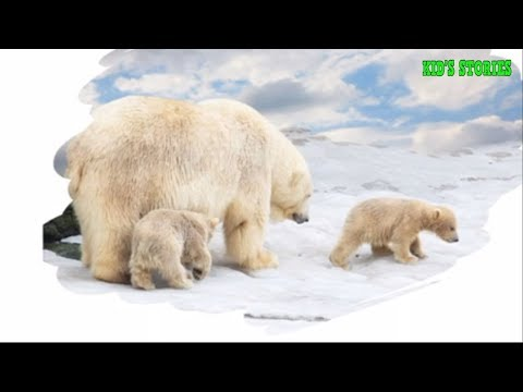 All about polar bears - Best kids stories