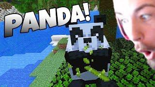 meeting-a-panda-in-minecraft
