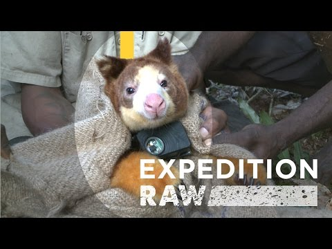 Real-Life Teddy Bears of the Rain Forest | Expedition Raw
