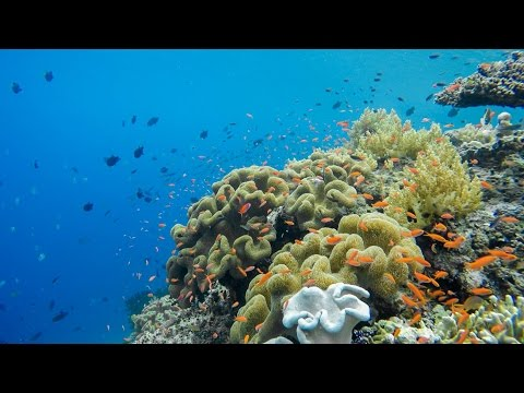 Underwater world of Banda islands - Maluku, Indonesia