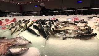 #1 Tourist Attraction in Sydney for Eating : Sydney Fish Markets