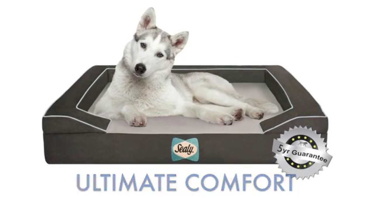 petco product bed gel en grey cooling shop pet right theracool petcostore dog therapeutics beds