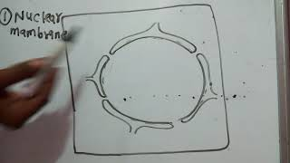 Structure of Nucleus part 1,nuclear membrane, nucleolus, chromatin network,euchromatin,heterochromat