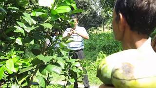 research lemon agriculture in nepal