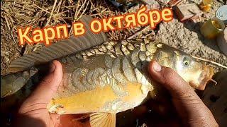 КРУПНЫЕ КАРАСИ И КАРП НА ЗАКИДУШКИ. Рыбалка на КАРПА и КАРАСЯ. Рыбалка на карпа осенью.
