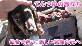 モコ・ベビーのてんつゆが仙台へ旅立ちました。 埼玉県に行ったノワール...