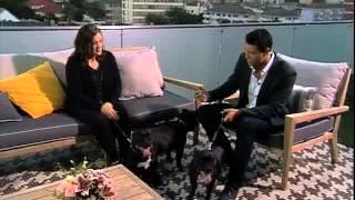 Bobtail: Staffordshire Bull Terrier  (6.3.2013)