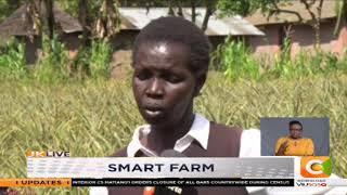 | SMART FARM | Pineapple Farming in Nandi County