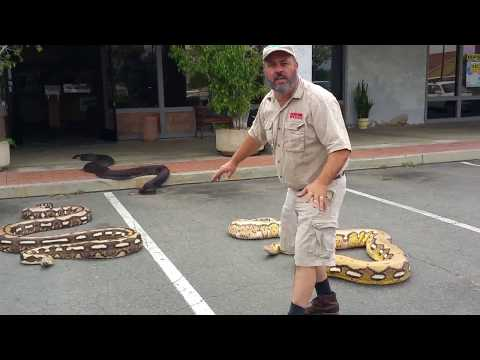 Giant Snakes On The Loose