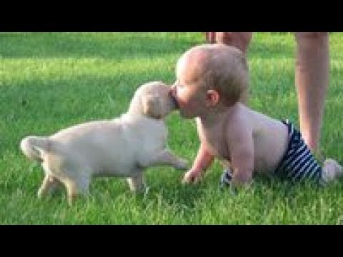 Nanny Dogs (Part 1) 😻 Cute Dogs Playing with Babies [Funny Pets]
