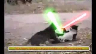 Gato Jedi vs gato Sith