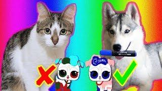 3 Маркера Челлендж / Хаски Синди с кошкой Масей и Куклы ЛОЛ / Чей питомец красивее?