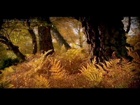 Mix - Karunesh: Autumn Leaves-Őszi Levelek [HD-BS]