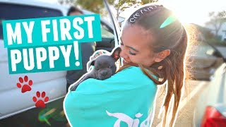 One of Adelaines Camera Roll's most viewed videos: FINALLY GETTING MY PUPPY!! Cutest Blue French Bulldog Puppy Reaction