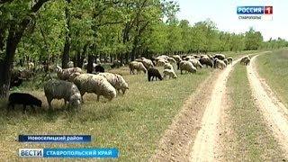 'Вести. Ставропольский край' 22.05.2018
