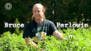 Could Hemp Save the Planet?