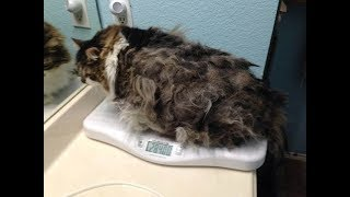 They Surrendered This Cat To A Shelter Because Of Matted Fur