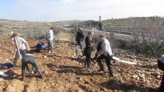 Olive Planting Program 2016