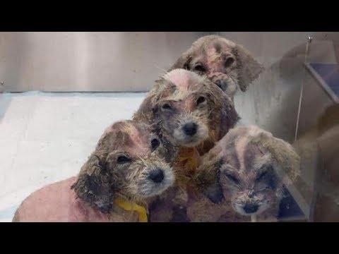 Мужчина нашёл в лесу шесть маленьких лысых щенков и забрал к себе
