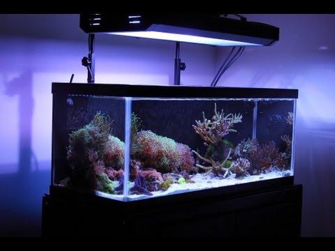 20 Gallon Long College Nano Reef Tank