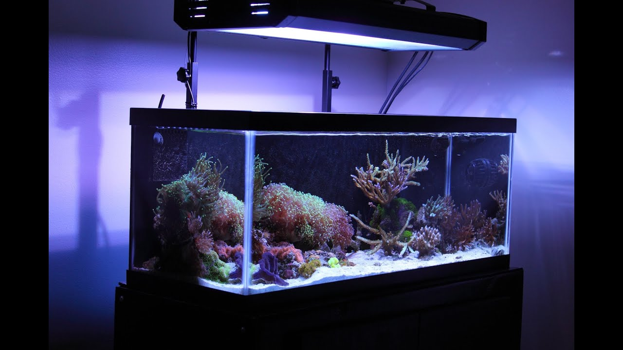 20 gallon nano tank 20 gallon long nano reef tank