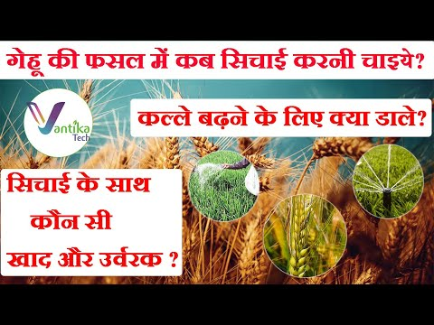 Wheat Nutrient and