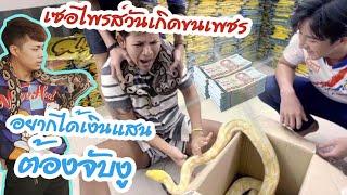 เซอไพร์วันเกิดขนเพชร-อยากได้เงินแสนต้องจับงู