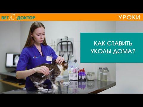 Как сделать укол коту в бедро видео