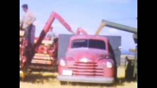 Grain harvest at Squirrel, Idaho (Early 1950's)