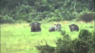 Repeat youtube video The Gioi dong Vat Animal Life 2011