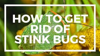 Spectracide Stink Bug Killer Review - How to kill Stink Bugs
