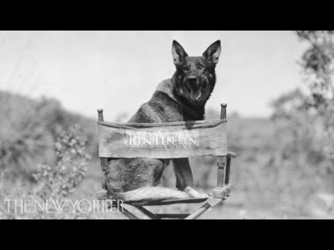 Susan Orlean on the original Rin Tin Tin - Commentary - The New Yorker