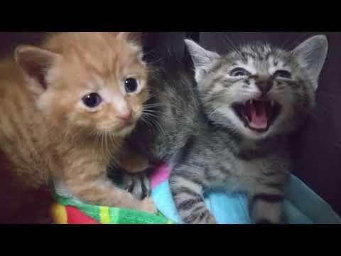 伊川谷ねこクラブ 子猫の威嚇