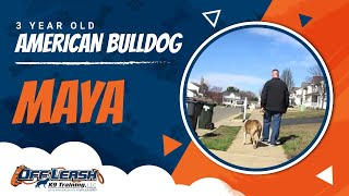 "3-year Old Bulldog ""maya:"" Have You Always Wanted To Hike With Your Dog?"