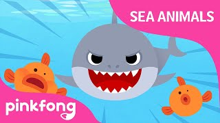 Doo Doo Doo Shark   Sea Animal Songs   Animal Songs   Pinkfong Songs For Children
