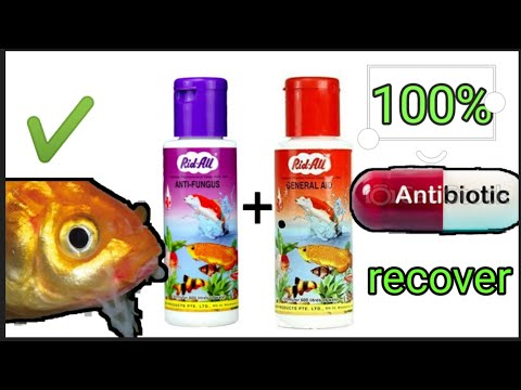 All Types Of Aquarium Fish Red Mouth And Red Fin Infection Treatment
