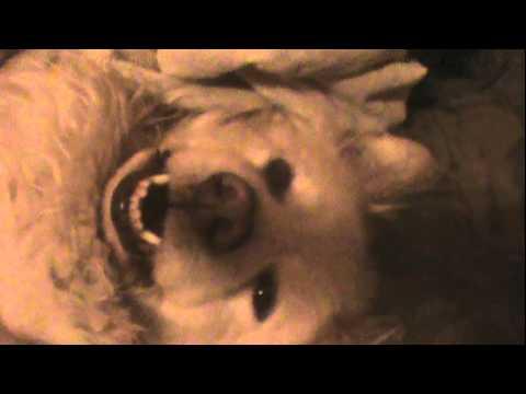 Don't Wake Bear