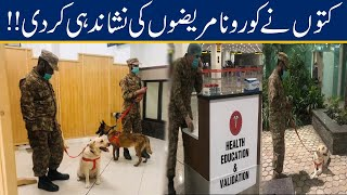 Sniffer Dogs Identified Five COVID-19 Patients At Peshawar Airport