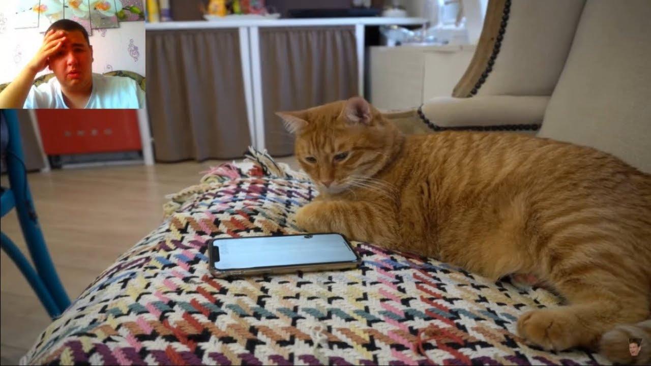 Картинки тигры кота брайна, поздравления днем