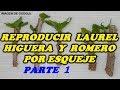 Reproducir Laurel, Higuera y Romero por Esqueje. -1ª PARTE