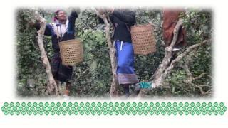 SYEUN TEA Started in Laos