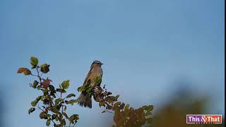 The (Un)Dramatic Bird Take-off