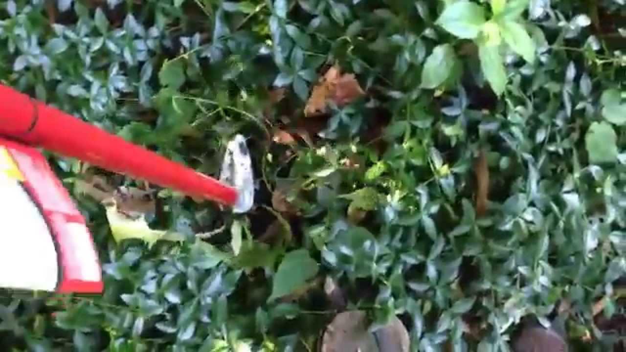 Review: Dandelion Tool Weasel Weedpopper Garden Tool