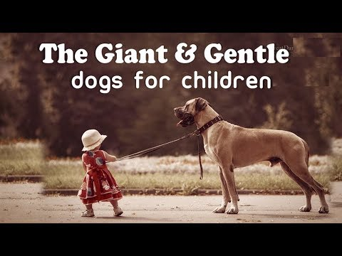 Top 10 Large Dogs for Children