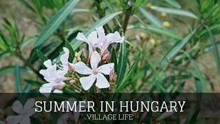 Vlog Summer In Hungary Village Life