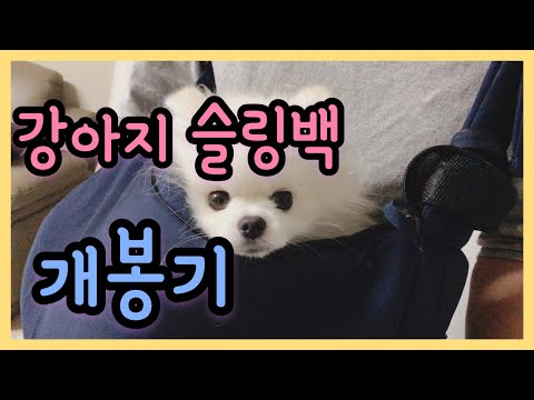 강아지 슬링백 개봉기 (딩동펫 구름 슬링백)